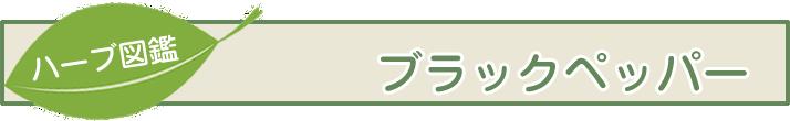【ハーブ図鑑】ブラックペッパー