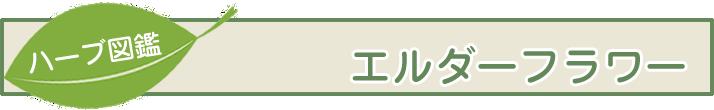 【ハーブ図鑑】エルダーフラワー