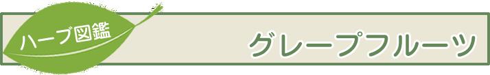 【ハーブ図鑑】グレープフルーツ