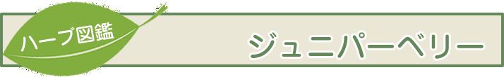 【ハーブ図鑑】ジュニパーベリー