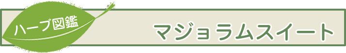 【ハーブ図鑑】マジョラムスイート