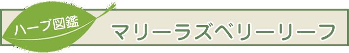 【ハーブ図鑑】マリーラズベリーリーフ