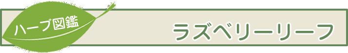 【ハーブ図鑑】ラズベリーリーフ