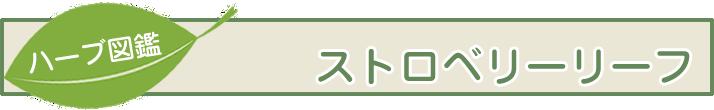 【ハーブ図鑑】ストロベリーリーフ