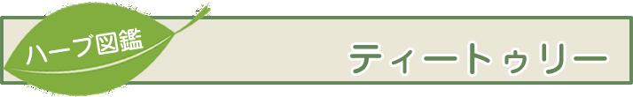 【ハーブ図鑑】ティートゥリー